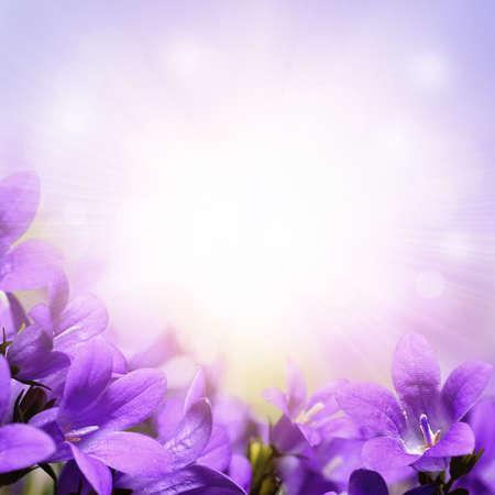 borde de flores: Campanula, púrpura primavera florece el fondo