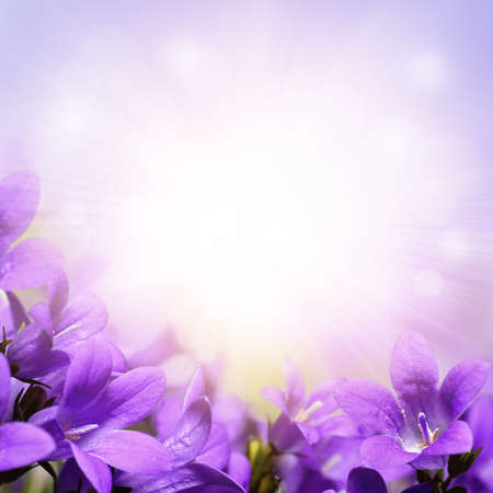 flowers bokeh: Campanula, purple spring flowers background Stock Photo
