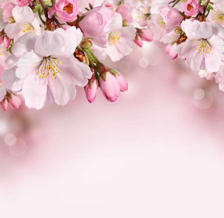 Spring border background with pink cherry blossom