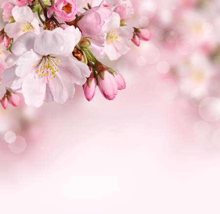 Spring flowers background with pink blossom Standard-Bild