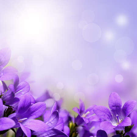 spring flowers: Abstract purple spring flowers background