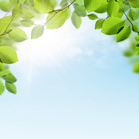 Spring and summer background with green leaves border, clouds and sunshine
