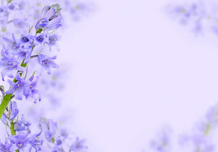 purple lilac: Purple hyacinth background