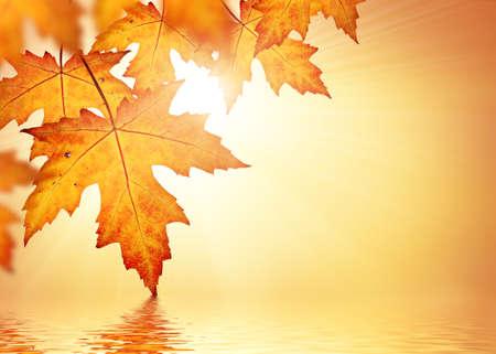 Orange Blätter fallen Grenze Hintergrund Standard-Bild - 31463691