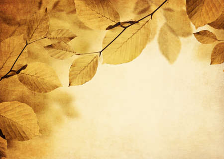 Fall background with texture and leaves