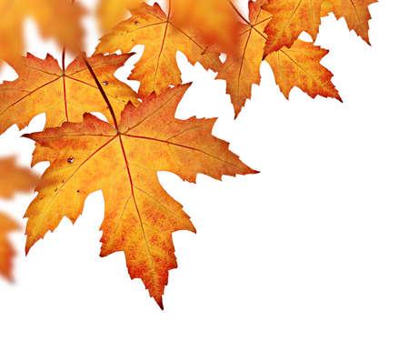 오렌지 가을은 흰색 배경에 테두리, 고립 된 잎 스톡 콘텐츠