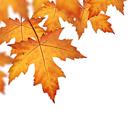 Orange fall leaves border, isolated on a white background Standard-Bild