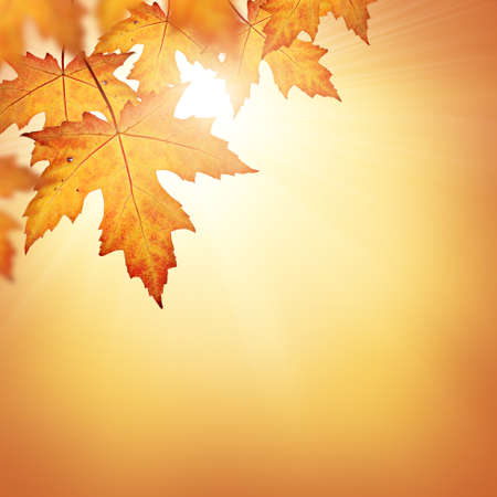 Orange fall leaves border background