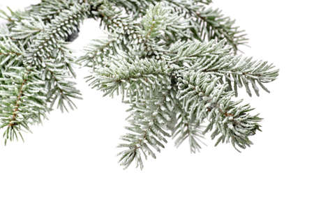 Fir tree branch with snow isolated on a white background Standard-Bild