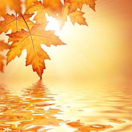 Orange fall leaves border background