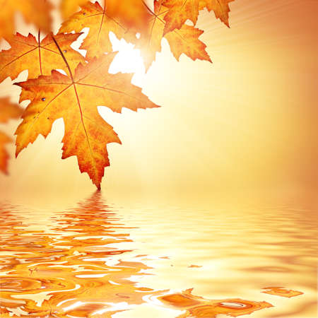 water on leaf: Orange fall leaves border background