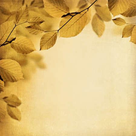 fall leaves border: Fall leaves border background Stock Photo