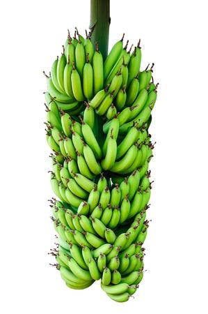 The Banana isolated on white background photo