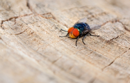 insectiside: close up of fly on wooden background