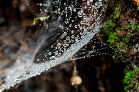 water drops on spiders web photo