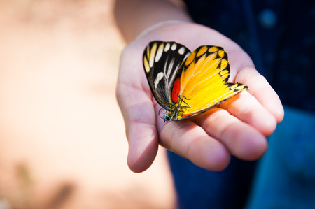Beautiful butterfly dead on the girl hand photo