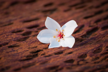 tunable: flower on wooden background Stock Photo