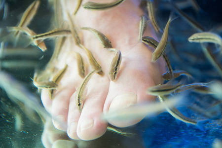 Fish spa pedicure wellness skin care treatment with the fish rufa garra, also called doctor fish, nibble fish and kangal fish.