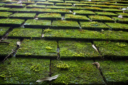 Old Roof Tiles Covered In Green Moss Stock Photo