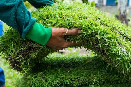 paysagiste: Plantation New Grass Banque d'images