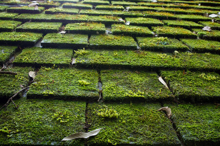 Old Roof Tiles Covered In Green Moss photo