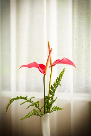 Anthurium, spadix  flower photo