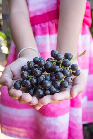 wine grower: Hand holding Fresh Red Bunch of Grapes