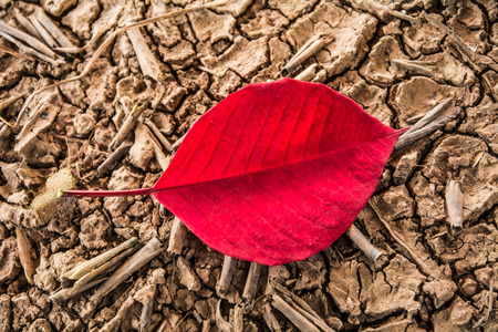 road paving: red leaf on the ground