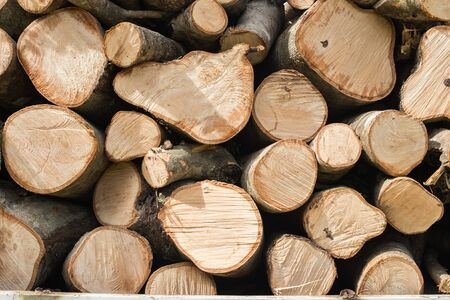 lumbering: timber texture Stock Photo