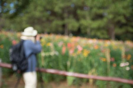 AFICIONADOS: difuminar fotógrafo aficionado en el campo de flores Foto de archivo