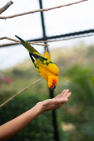 Macaw bird eating from human hand Stock Photo