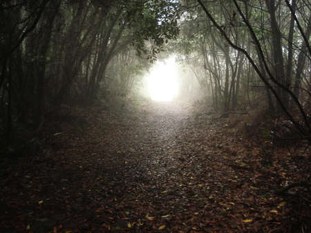 charmed: Image of the inside of a forest