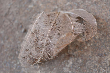 Image of a dry leaf on the ground