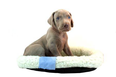 Puppy 版權商用圖片 - 455252