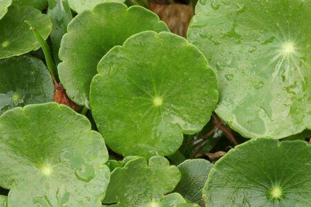 Green World Stock Photo - 3072841