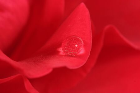 Water drop on a red rose Stock Photo - 3068370