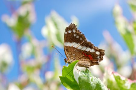 Single butterfly resting on a tree leaf Stock Photo