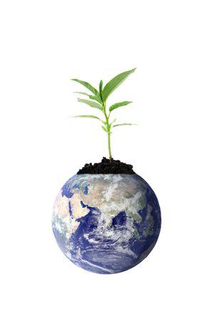 madre terra: Nuova vita per la madre terra
