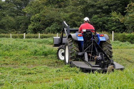 hogging: Small farm tractor bush hogging on a grass field