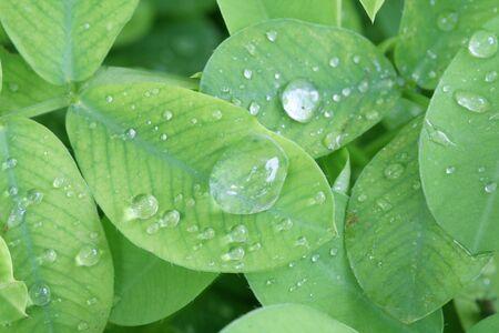Macro shot of wet leaves with rain drops