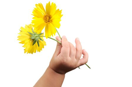 baby's: Babys hand with two flowers isolated on white Stock Photo