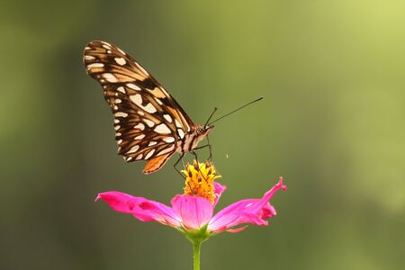 Beautiful butterfly posed on a red flower Stock Photo - 6755529