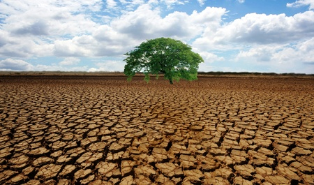 arid: Barren desert land with a single green tree in the middle Stock Photo