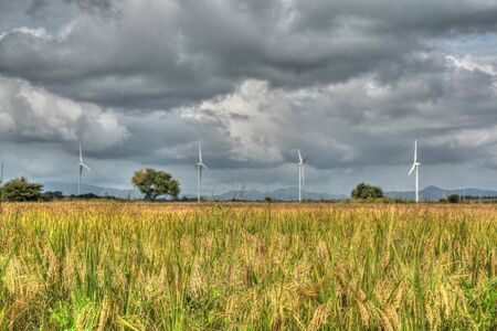 hdr background: Rice field with wind turbines in the background in the countryside of Panama done in HDR