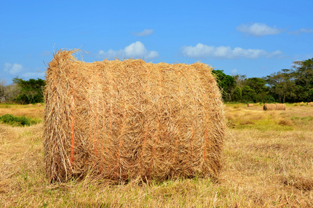 One hay bale on a pasture field with a beautiful blue sky Stock Photo