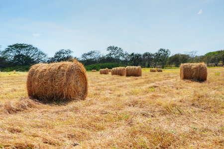 Hay bales in a pasture field with a nice blue sky Stock Photo
