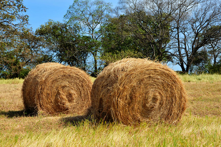 Two hay bales in a pasture field Stock Photo