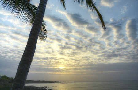 Beautiful sunrise seen from behind a palm tree at Pedasi, Panama