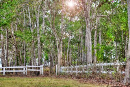 Tree forest surrounded by a white old wooden fence with the sun shining Stock Photo