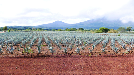 TEQUILA-MEXICO-SEP 26, 2017: Standing at a height of 2,920 meters above sea level,  The Tequila Volcano, or Volcan de Tequila is a Stratovolcano located near Tequila, Jalisco, in Mexico.